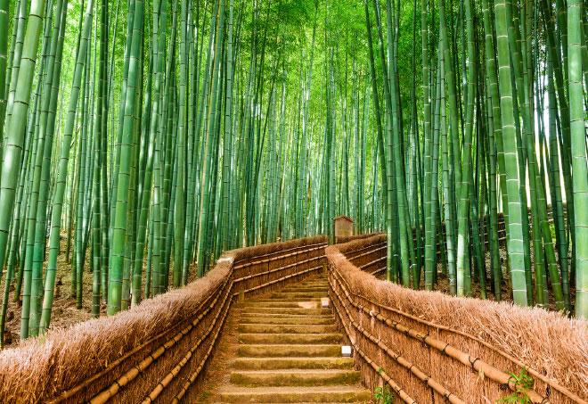 bambú escaleras